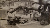 Çatalca'nın Anıt ve Korunmaya Değer Ağaçları